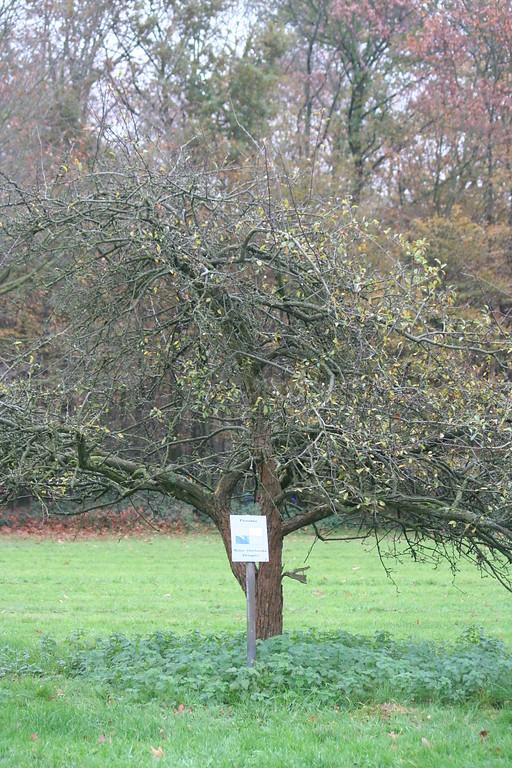 Forstbotanischer Garten Mit Friedenswald Zwischen Rodenkirchen Und