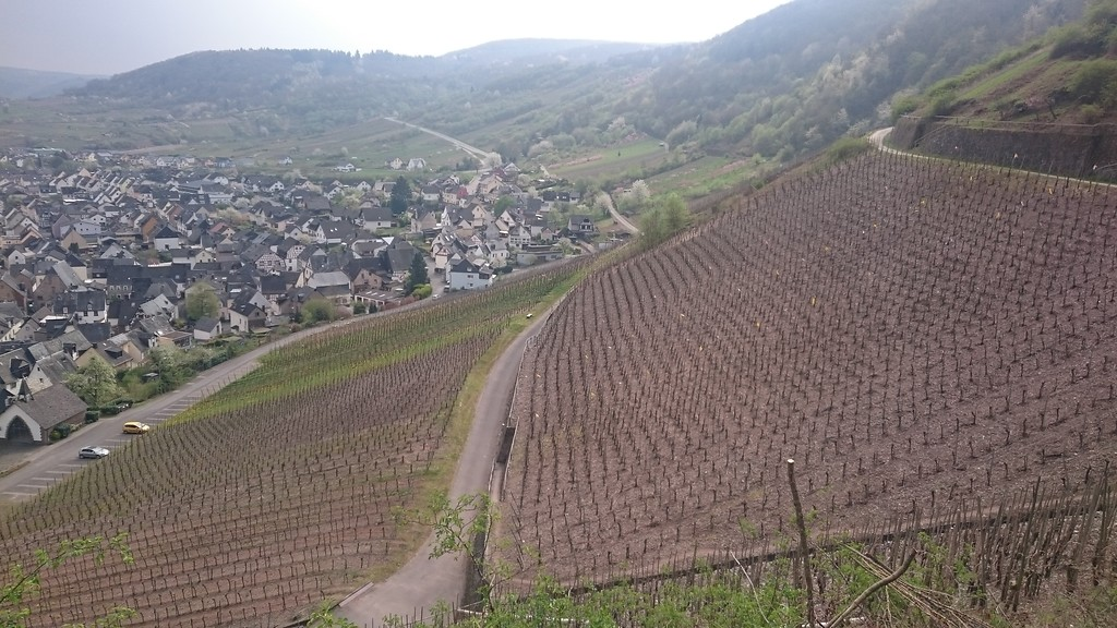 Weinberge am Calmont (2017)